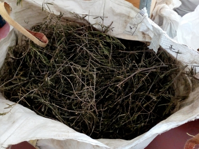 Residuos poda olivo