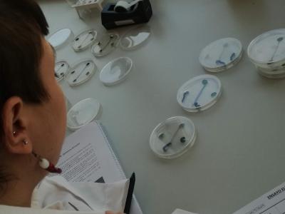 06 Técnico supervisando el ensayo de elección con larvas de Spodoptera littoralis