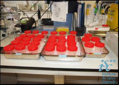 Daphnia magna straus Ensayo toxicidad aguda 2